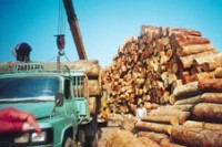 Illegal timber exports along the Burma-China border used to account for about US$2 million of Burma's annual foreign income. A ban took effect on 1 April 2014. (PHOTO: DVB)
