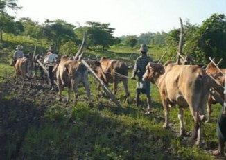A file photo of a farmers protest a land grab by ploughing the confiscated land Padaung township, Prome district. (PHOTO: DVB)