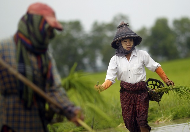 Farmers plant rice seedlings in a paddy field on the outskirts of Rangoon in 2012. (PHOTO: Reuters)