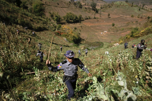 FIle photo of police and villagers using sticks and grass cutters to destroy a poppy field above the village of Tar-Pu, in the mountains of Shan State in January 2012. (PHOTO: Reuters)