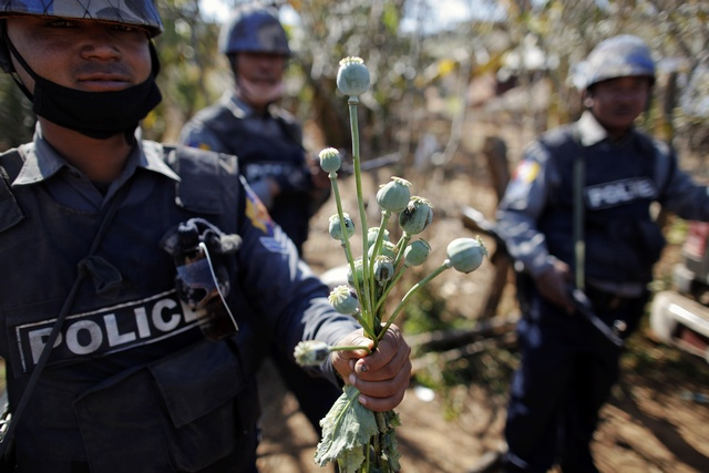 Burma is one of the world's biggest producers of opium, which is used to make heroin. (Photo: Reuters)