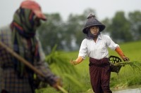 Farmers plant rice seedlings in a paddy field on the outskirts of Rangoon on 13 July 2012. (Reuters)