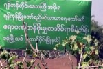 "Sign erected on jatropha farm reading: ""Rangoon Region Government, Yangon City Development Committee, Irrawaddy Low-Cost Housing Project, South Dagon Township"" (DVB)"