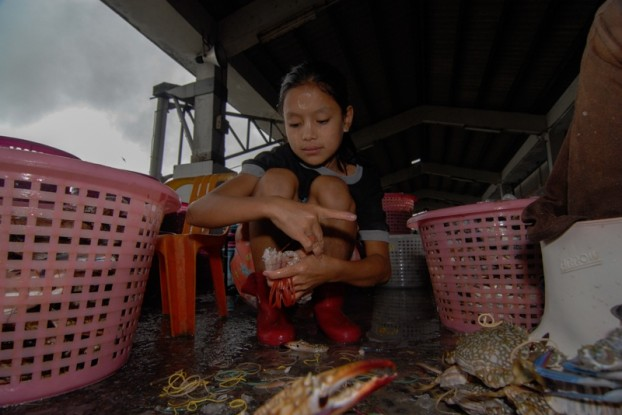 A young girl packs crab at the port of Ranong in southern Thailand. (PHOTO: John Hulme)