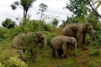 Burmese state-run media posted a picture showing three of the six elephants among the parade signted in central Burma this month.  (PHOTO:MOI)