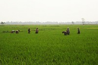 File photo of Burmese farmland.