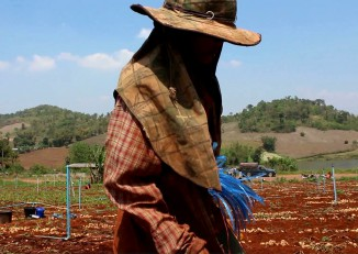 The 12-year-old son of Burmese migrants picks potatoes in a field in Thailand's Tak Province. (Screenshot/DVB)
