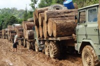 Log trucks in Kachin State wait to cross the border into China in April 2015. (Photo: EIA)