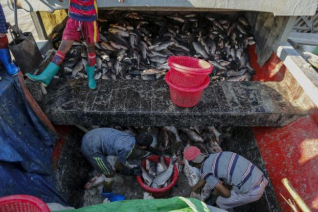 Children unload fish from a boat at San Pya fish market in Rangoon, 16 February, 2016. (PHOTO: REUTERS)