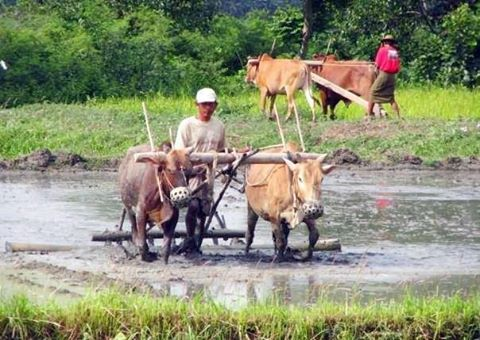 File photo of farmers in Arakan State. (Photo: DVB)