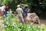 Forestry officials in Gwa Township, Arakan State, examine the body of an elephant killed on 15 July 2016. (Photo: DVB)