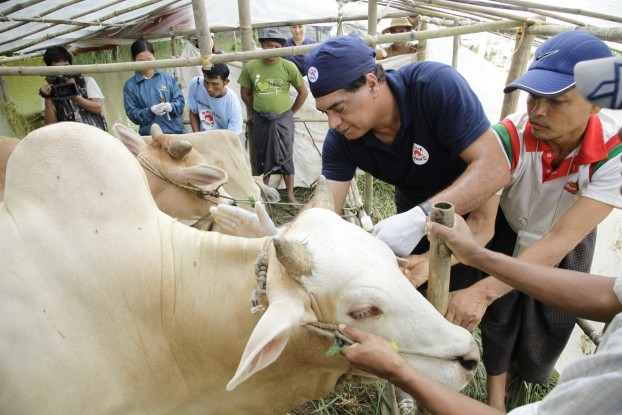 A Four Paws team helps the animals after floods in several regions in Burma. (PHOTO:  Vier-Pfoten)