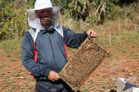 A beekeeper holds up a honeycomb covered in bees in Kalaw Township, Shan State. (Photo: Myanmar Now)