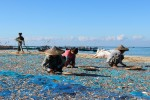 Local women in Thandwe township in Arakan State lay the fish out to dry in the sun. (Photo: Ei Cherry Aung/Myanmar Now)