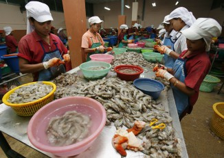 Migrant workers work at a shrimp factory in Samut Sakhon, on the outskirts of Bangkok, on 22 March 2007. (Photo: Reuters)